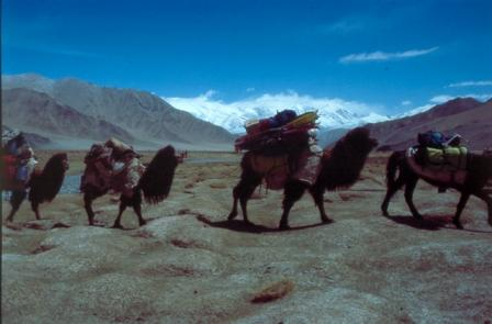 Caravan on the way from Subash village to base camp