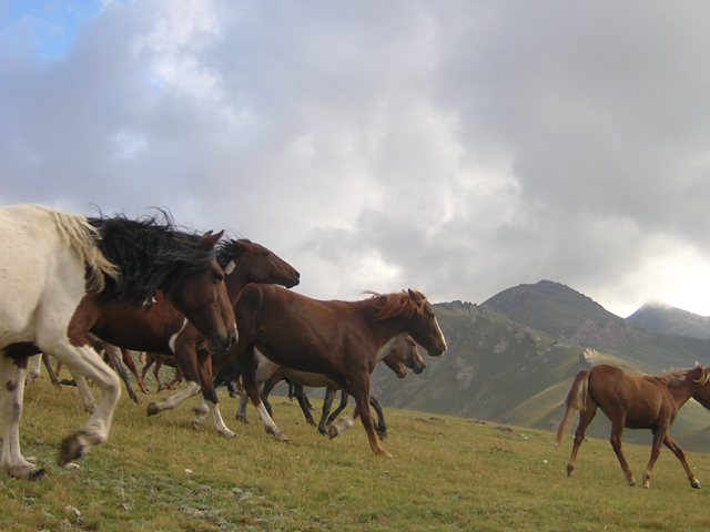 It is well possible horses riding in Chon-Kemin Gorge